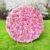 blossom-pink